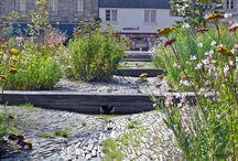 Rain gardens/ storm water management