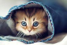 Filhotes de gato lindooooos