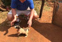 St David's Marist Inanda Service Camp: RainbowNation Animals