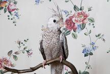 BIRDS / by Christopher Lee Sauvé