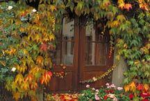 Fall / by Jo