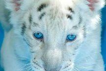 les animaux les plus beau