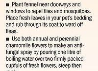 Herb Garden Otdoor Design