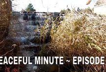 Peaceful Minute Series / This is my new series.  I will be posting 1 minute videos of peaceful moments that I see in Nature. We all can use 1 minute of peace in our busy lives. I'm planning on posting a new videos to this series every Friday for a year. That's my goal.  ENJOY!!