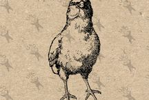 Vintage clipart - Hen Chicken