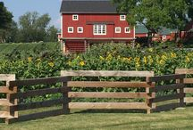 Farmstead / A glimpse into life on our farm