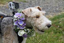 Emma's things she likes .... / Wedding flowers that catch my eye / by Emma Fawcett-Eustace Flowers