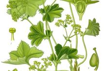 Kräuter/ Heilpflanzen
