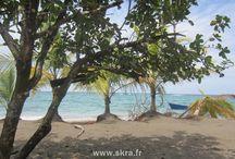Costa Rica, Pura vida ! / Les Caraïbes, les forêts de nuages, un vrai paradis. Que dire de plus que Pura vida !
