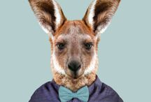 Australian Animal Portraits / Meet the unique animals of Queensland from Hammo the Koala to Reggie 'Big Red' the Kangaroo. Learn about their diet, their appearance and where you can find them in Queensland.