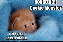 Adorable Feline Anecdotes  / by TraceyJean
