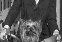 Audrey Hepburn / Née le 4 Mai 1929