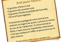 anti puces naturel