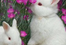 Animals with Flowers