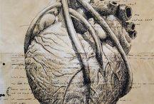 Anatomy, Nurse, Medical