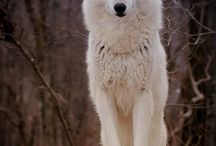 WOLVES / THAT INNER STRENGTH AND BEAUTY