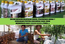 HUB 0851 0333 2222 ( TSEL ) Peluang Bisnis bagi Wirausahawan / Peluang Bisnis bagi Wirausahawan,Peluang Bisnis bagi Wirausaha,Peluang Bisnis bagi Pengusaha Muda,Peluang Usaha bagi Wirausahawan,  Apakah GDM GDM merupakan Pupuk Bio Organik Cair yang di hasilkan dari bahan-bahan organik dan bakteri yang diperlukan oleh tanaman.  BERMINAT DENGAN PELUANG DARI KAMI HUBUNGI :  0851 0333 2222 ( TSEL ) http://peluangusahaagro.com/