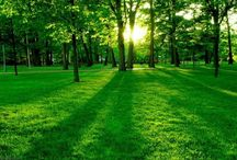 Soft Green Nature