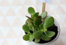 Plantas / Suculentas, ervas aromáticas  e outros verdes