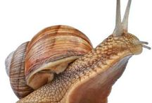 Snail - Šnek