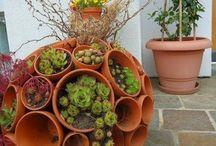 potplant heaven