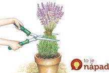 Rastliny starostlivosť, druhy