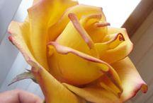 Kwiaty z masy cukrowej