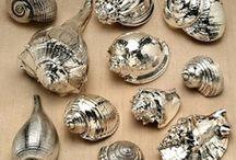 Shells / Shell craft