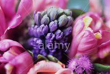 Spring / by Alamy