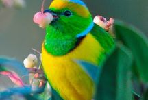 Bird pic's I'd like to paint / by Hiedi Schmidt