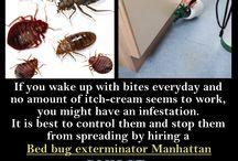 Bed Bug Exterminator Manhattan