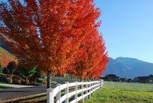 Autumn leaves / by Gloria Erickson