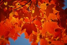 Autumn photography / by Cindy Turney