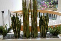 Textilpflanzen / Textilpflanzen in hervorragender Qualität bekommen Sie auch bei Gedike Begrünungen. Hier nur eine kleine Auswahl von unseren künstlichen Pflanzen und Blumen. Gerne zeigen wir Ihnen noch mehr von unserem umfassenden Angebot.