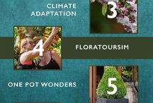 Urban Gardening and Clean Food