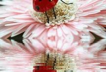 Miss Ladybug..!