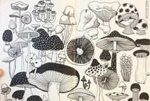 book drawings