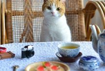 Cat-tastic / Cats / by Miranda Cherry