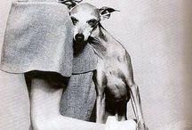Greyhounds / Our precious Vespa