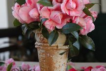 Fresh Flower Arrangements / Using imagination and design to create beautiful arrangements for all occasions / by P. Allen Smith