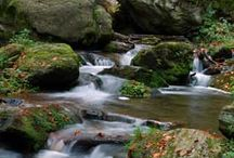 Rivers, Streams,Ponds all giving Life / Rivers and anything where water is flowing brings forth life