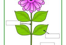 od semienka k rastlinke