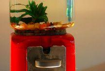 Fish tanks / Swim little fishy..... Swim