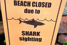 Always planning...SHARK! / by Phyllis Hinze