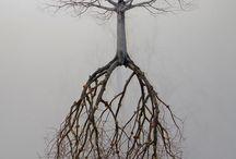 upp med rötterna
