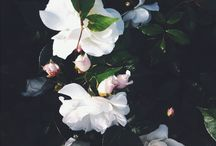 とろりとろける様な花