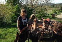 Les ânes du Plo / quel bonheur de découvrir la garrigue au rythme du pas des ânes.