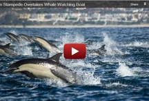 dolphins joy for being alive