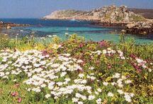 My Home, Cornwall <3
