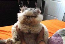 Funny Furry Pics